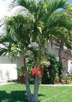 Centre du palmier paradis jardins accessoires - Centre educatif du palmier ...
